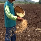 Corporate Farming Won't Ease Hunger in Mindanao