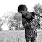 Responsible Agricultural Investments: Rationalizing Land Grabbing