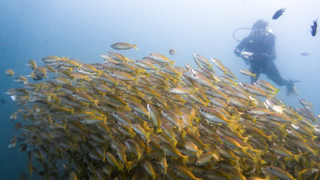 duikenfilipijnen-23