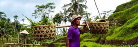 De Perfecte Bali Route!
