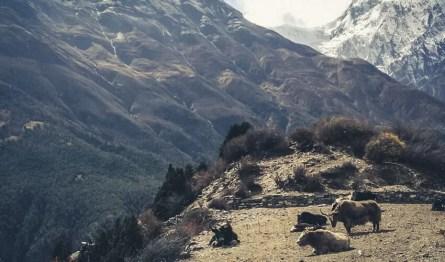 De ultieme Nepal route 4 weken