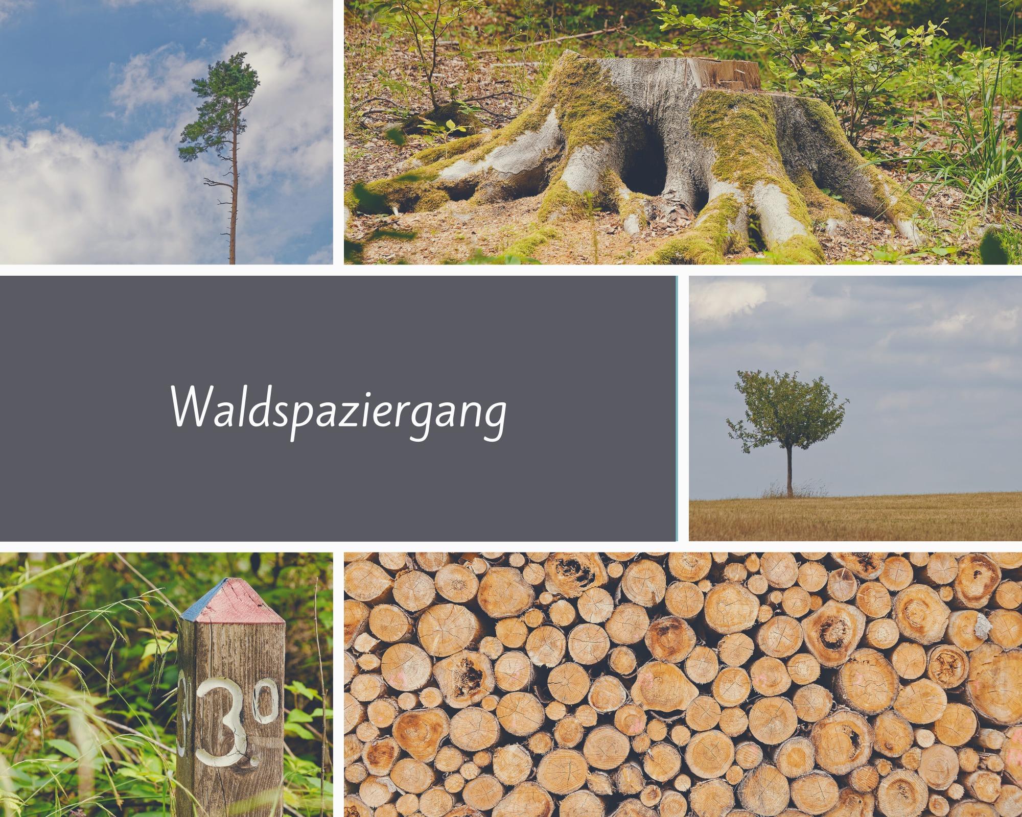Titelbild: Waldspaziergang Juli 2020