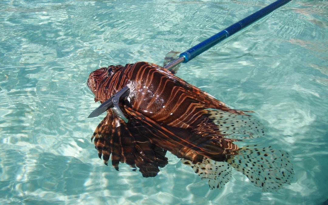 Lionfish and Foldspear