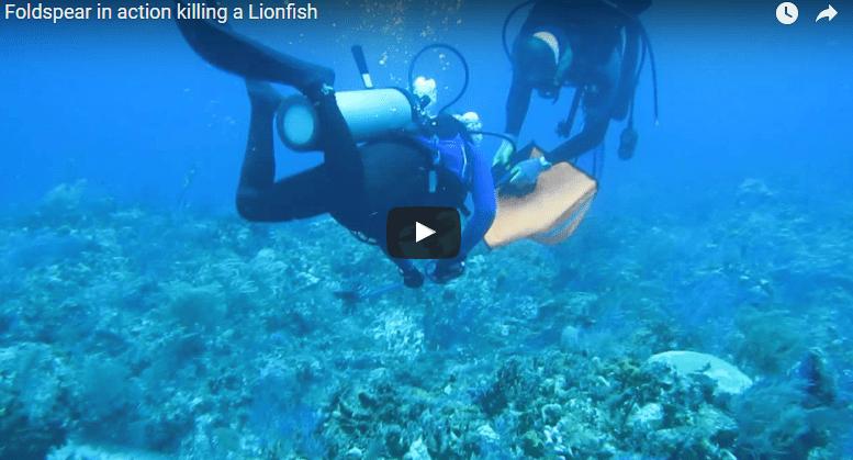 Foldspear video, hunting a lionfish