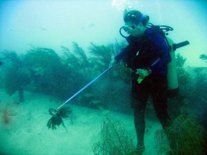 Star with a lionfish on her Foldspear