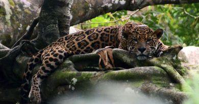 Manaus-Amazonas-Amazonia-Estudo-comprova-arvores-durante-Amazonica