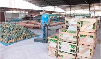 A-equipe-do-Programa-recebeu-os-produtos-dos-agricultores-cadastrados-no-PAA