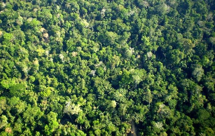 Comunidade_clímax_em_floresta