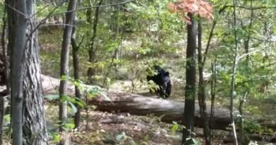 bear-attack-hiker-dea_fran