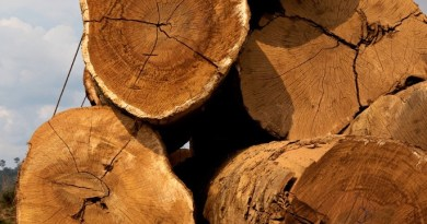 madeira folha de sao pualo
