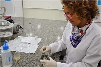 Kariane-Nunes-desenvolveu-um-gel-voltado-para-medicamentos-mais-eficaz-no-tratamento-de-vaginites-e-vaginoses