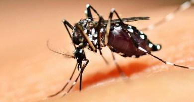 dengue_0
