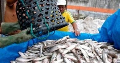 destaque-344746-pescador955