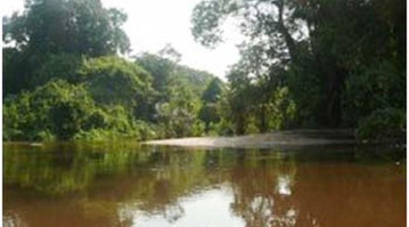 floresta-nacion-al-do-crepuri-no-para