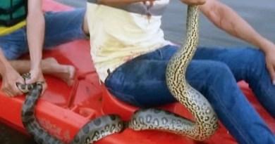 Sucuri-giboia-cobra-ataca-homem-em-lago-990x556