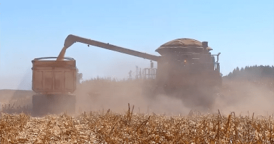 etanol mt milho