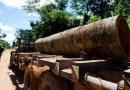 Multinacionais financiam desmatamento na Amazônia