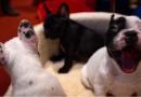 Spotify lança playlists para cachorros que ficam sozinhos em casa