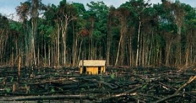 Desmatamento-na-Amazônia