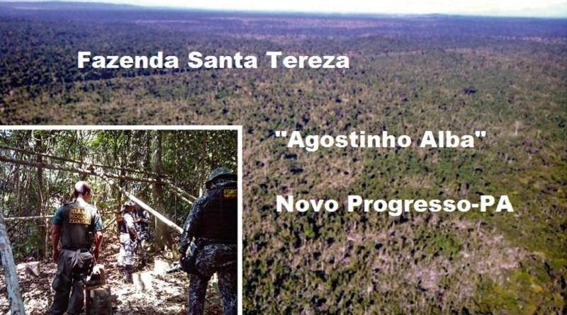 Desmatamentos (1)