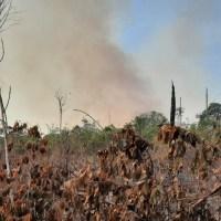 Homem é preso em flagrante incendiando floresta no dia do fogo em Cachoeira da Serra
