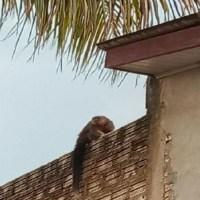 Macaco aparece em pátio de casa e preocupa moradora de Novo Progresso
