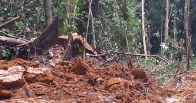 madeira riozinho