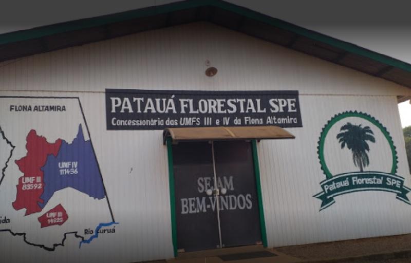 Patauá Florestal em Moraes :Almeida (Foto::reprodução)