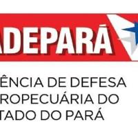 Edital ADEPARÁ 2021 é publicado e tem vagas para Novo Progresso, Trairão, Moraes de Almeida, Castelo dos Sonhos