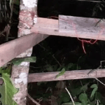 Homem morre baleado pela própria arma durante caçada em Mato Grosso
