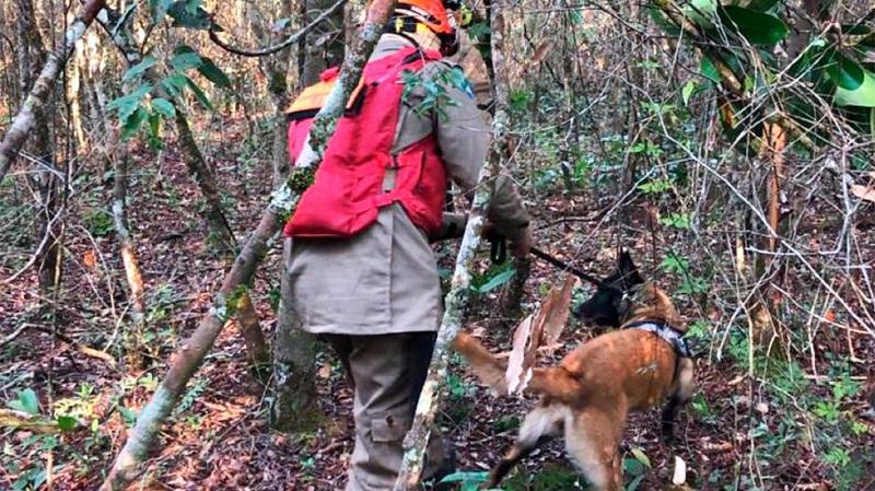 Cachorra Hot (farejadora) ajuda nas buscas. (Foto:Reprodução)