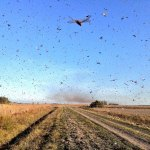 Ministério da Agricultura publicou uma portaria que autoriza importação de agrotóxicos para conter nuvem de gafanhotos (Foto: Servicio Nacional de Sanidad y Calidad Agroalimentaria (Senasa))