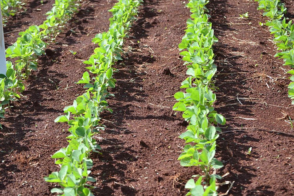 Demora do TJBA ameaça plantio em celeiro agrícola do país