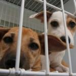 Guarapari recebe feira de adoção de animais neste sábado (25)