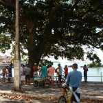 Populares paralisam corte de árvores na Prainha de Muquiçaba em Guarapari