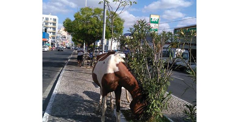 Na manhã de hoje, cavalos