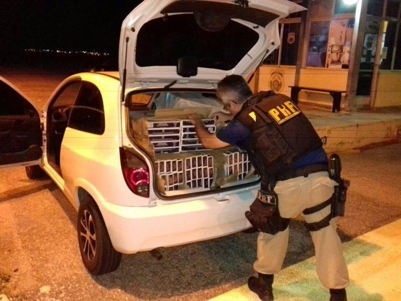 Dupla é presa suspeita de roubar carga de cigarros que estava em caminhão que tombou na BR-230. Ouça