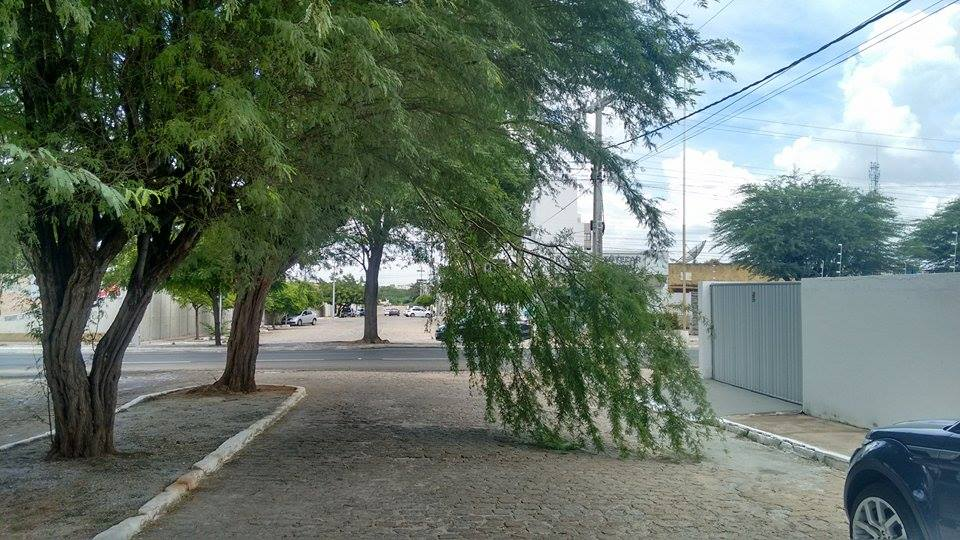 Atenção, Prefeitura: galho de algaroba atrapalhando o trânsito na Rua Fenelon Benevides