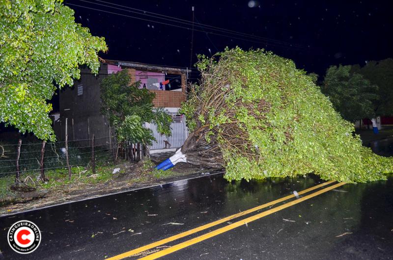 Rajada de vento provoca estragos em Catingueira