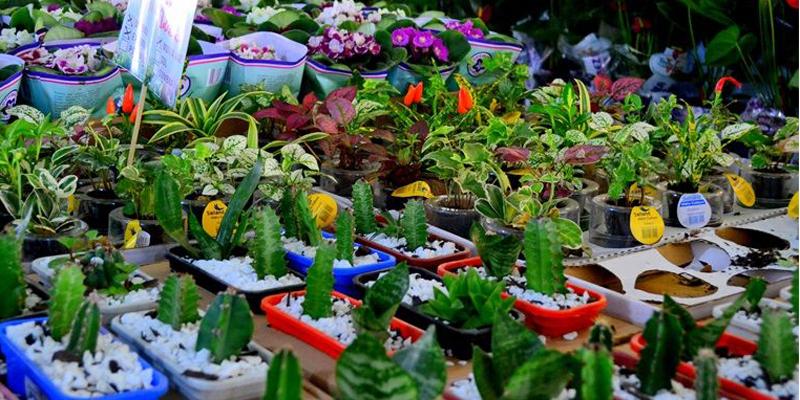 De 30 de março a 09 de abril, em Patos: 3° Festival de Flores de Holambra