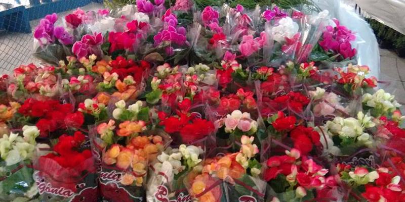 Nesta quinta, às oito horas, abertura do 3° Festival das Flores de Holambra, em Patos