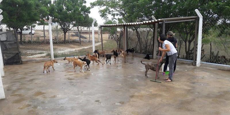 Secretário diz que os animais recolhidos estão recebendo atendimento veterinário e que vai realizar Feira de Adoção