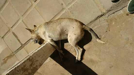 Matança de cães e gatos em Teixeira causa revolta e tristeza na população