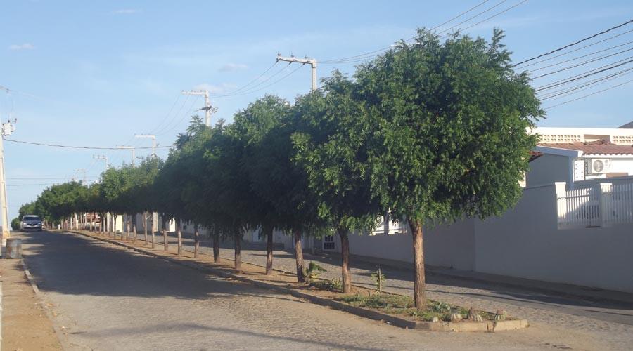 Bairro mais arborizado de Patos tem 110 árvores já na entrada
