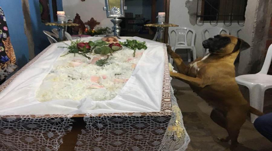 Cadela emociona familiares ao velar corpo de dona que faleceu em Teresina