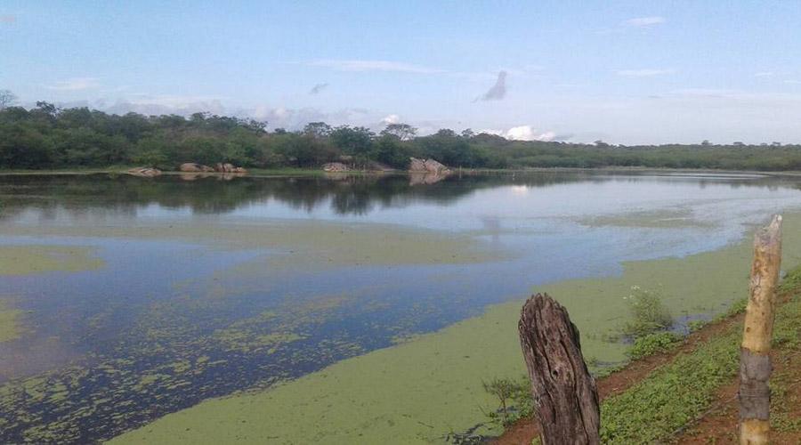 Chove 55 mm no Distrito de Barrento, em Cajazeirinhas, e açudes pegam recarga
