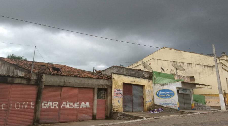 Bodes são vistos andando em cima de telhados em Serra Redonda, PB