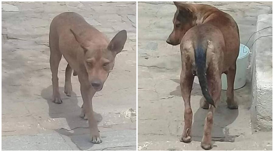 Adota Patos faz campanha para ajudar no tratamento de câncer da cadela Menina