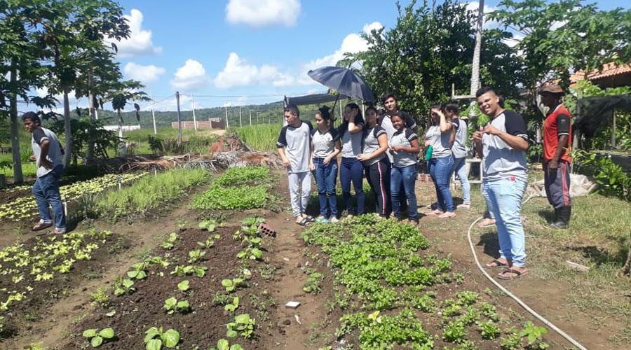 Alunos aprendem sobre hortaliças orgânicas e defensivos naturais em aula de campo, em Malta