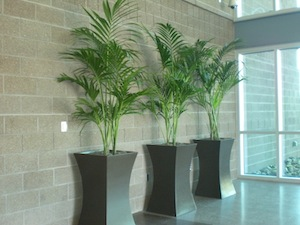 Foliage Unlimited  Arizona Interior Plant Design  Sales  Rental and     Interior Plant Design  Sales Rental   Maintenance